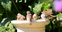 Bird bath fun...