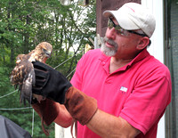 08-14-12 Broad-winged Hawk Rescue