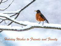 1039PS1a American Robin in the Snow - Yard Birds - Concord, NH 01-18-14